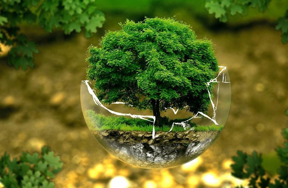 Envases de cartón ecológicos