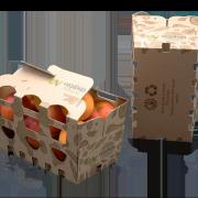 Barqueta cerrada 1kg con albaricoques, Vegabaja Packaging
