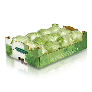 S23 tray with lettuce